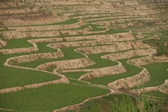 Reisterrassen - China
