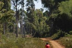Mitten durch den Jungle - Laos