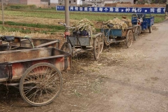 Typische Dreirad-Velos - China