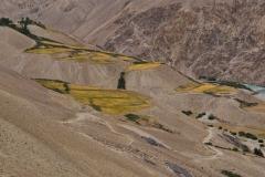 Erste grüne Flecken in der Nähe von Langar.