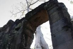 Ein Baum der direkt auf der Mauer des Tempels gewachsen ist.