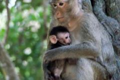 Affenmutter und ihr Baby.