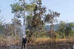 Kleiner Waldbrand der immer noch am glimmen ist.