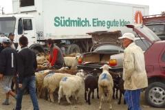 Morgens auf dem Viehmarkt. Die deutschen Lastwagen erleben hier ihren zweiten Frühling...