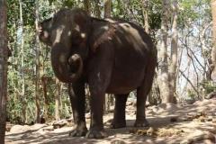 Arbeits-Elefant in der verdienten Mittagspause