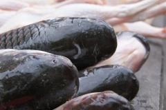 Fische, Hühnerbeine und was man sonst so zum kochen braucht, gibts auf dem Markt.