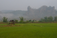 Morgennebel über den Reisfeldern
