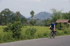 Durch grüne Reisfelder