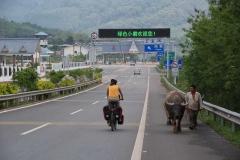 Ankunft in China. Vom kleinen Teersträsschen gehts auf die vierspurige Autobahn. Inklusive Wasserbüffel allerdings ;-)