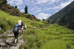 Aufstieg durch Reisfelder
