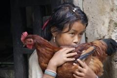 Nepalesischer Teddy-Ersatz