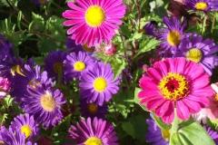Blumenpracht.