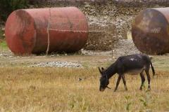 Esel und Altmetall