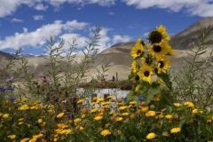 Camping in Mitten von Sonnenblumen